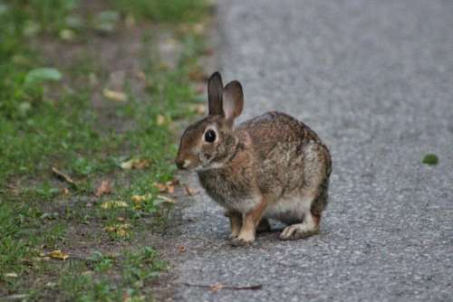 animal rodent rabbit bunny alert