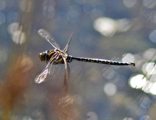 Draggonfly draggon fly insect nature
