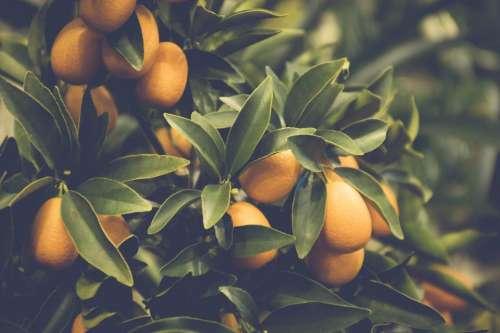 citrus orange mediterranean