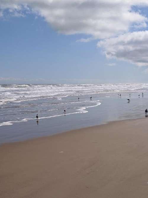 sand beach sand bar sea gull