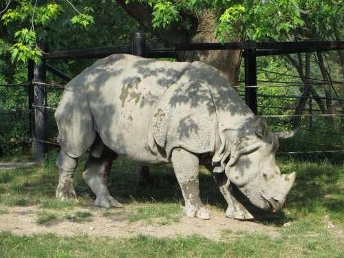 Rhinoceros animals zoos large animals