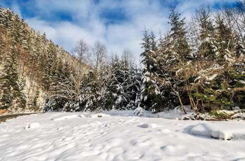 winter landscape forest spruce mountain