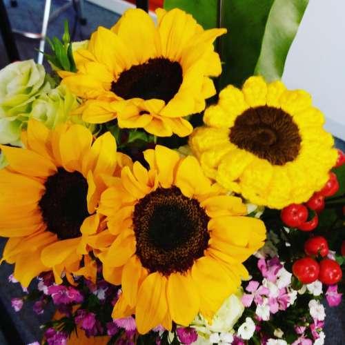 sunflower bloom yellow #sunflowers