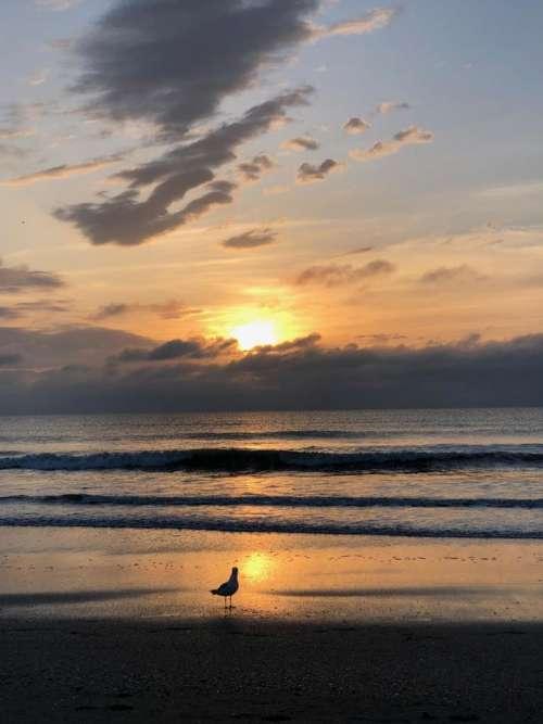 sunrise sunset water seashore beach