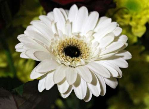 nature natural flower flowers petal