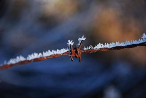 frozen frost icy winter wire