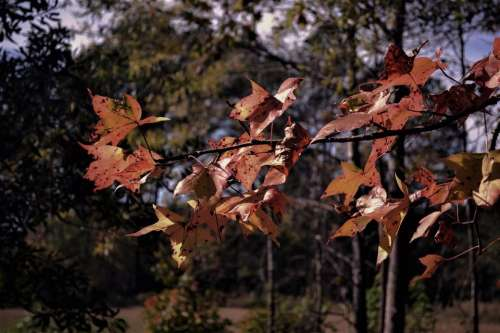 Autumn leaves brown branch spots