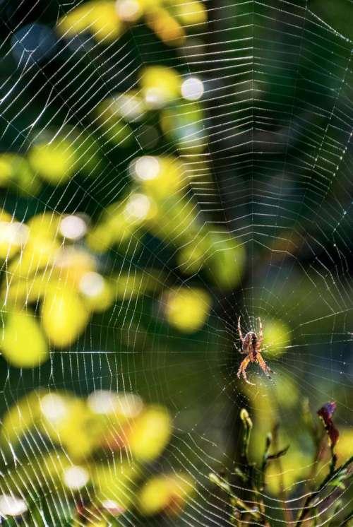 spider web background bokeh foliage