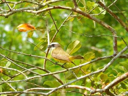 Bird yellow forest wild