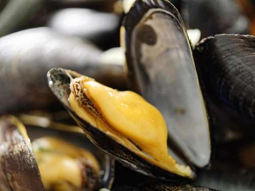 food mussels mussels in white wine
