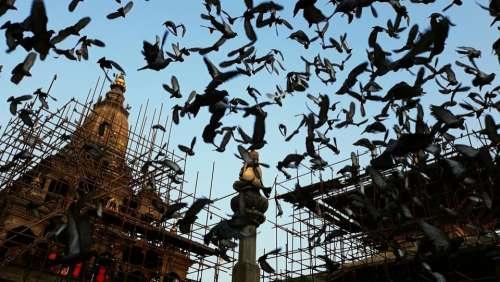 Nepal pigeons construction