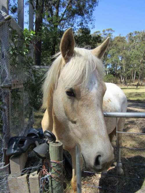Lucy girl horses country farm animals