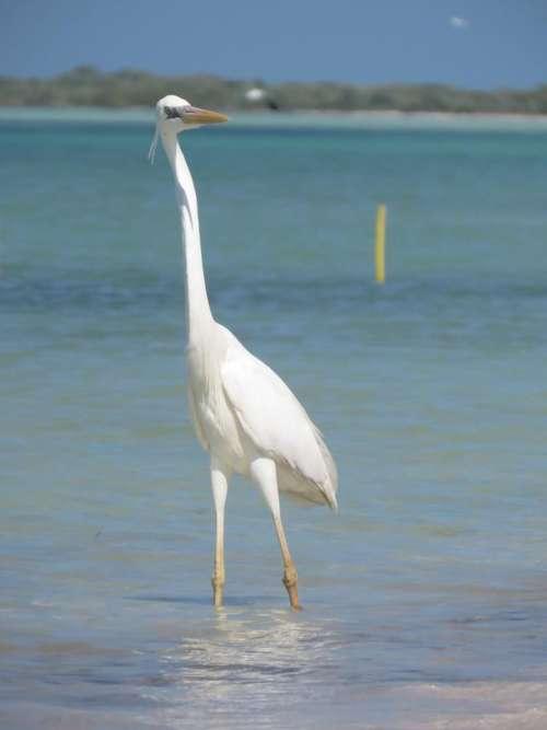 crane heron sea mexico holbox