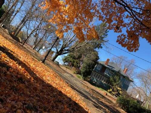 Autumn leaf leaves foliage