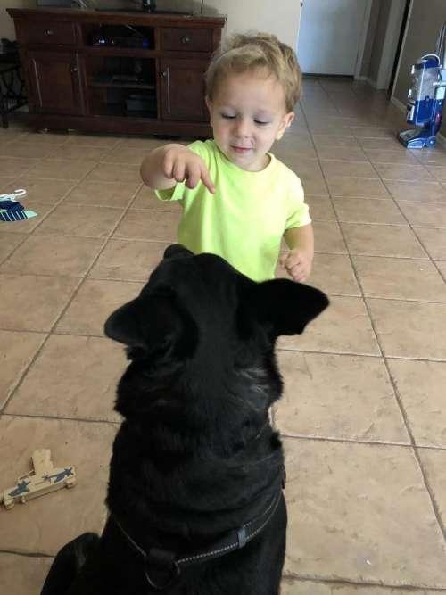dog trainer dog trainer training puppy