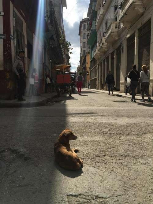dog cuba street sun street scene
