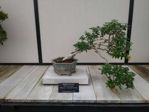 tree small tree bonsai little small