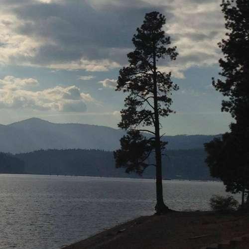 Evergreen trees trees lake mountains