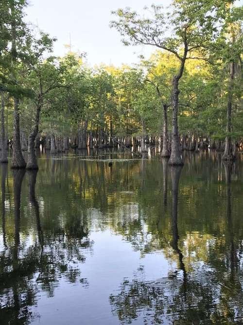 Bayou pond lake wilderness nature