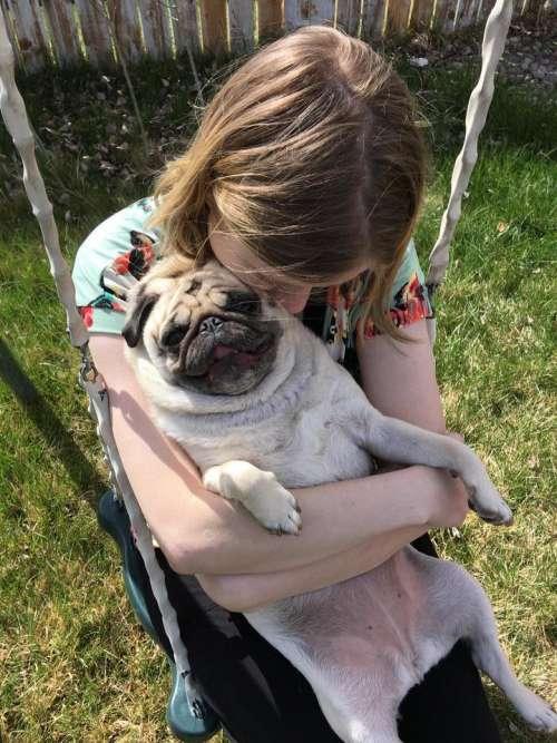 pets love dog pug