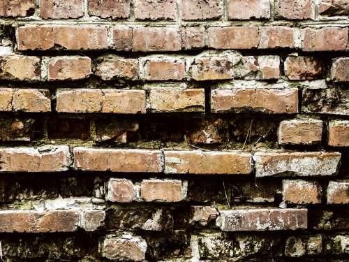 Texture Brick Wall free image