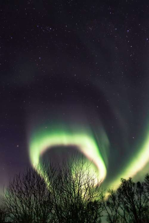 Tree Silhouettes with Northernlights