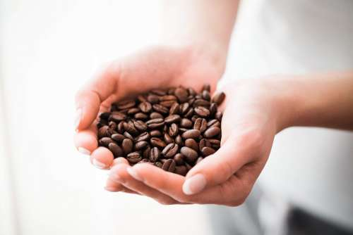 Woman Holding a Handful of Coffee Beans
