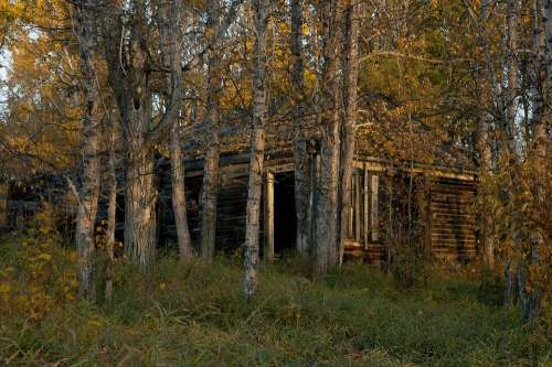 Abandoned Cabin Wood Rustic Shack Old Rural Fall