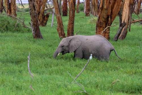 Africa Kenya Amboseli Safari Landscape Wilderness