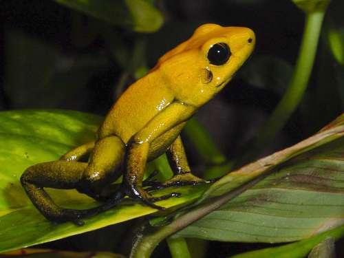 Amphibians Poison Frog Frog Terrarium