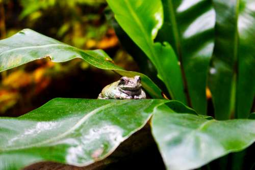 Animals Frog Toad Green Pond Amphibians Nature