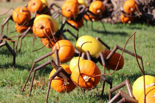 Ant Autumn Pumpkin Pumpkins Exhibition