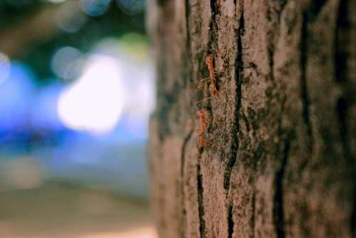Ant Nature Woods Wood Land Trees Close Up Zoom