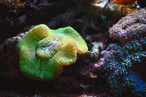 Aquarium Coral Nemo Tropical Fish Sea Underwater
