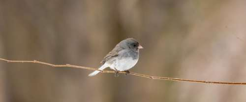 Backyard Wildlife Birdwatching Bird Perch Tree