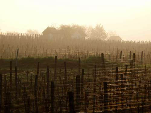 Baranya Villány Cellar Grape Fog Vineyards Autumn