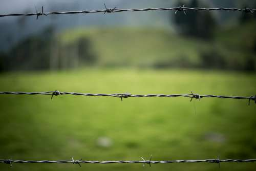Barbed Wire Fence Nature Green Wire Blur