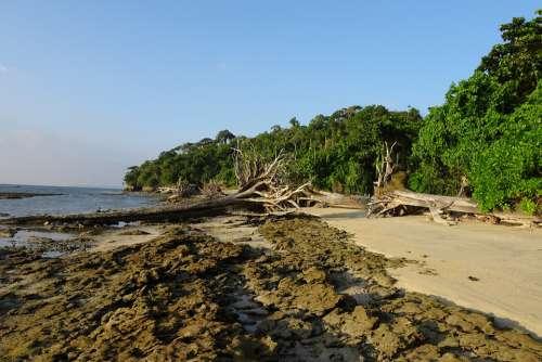 Beach Sea Wandoor Foliage Vegetation Coastal