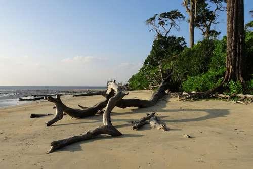 Beach Sea Wandoor Log Tree Uprooted Dried