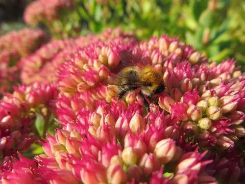 Bee Nectar Pollination Flowers Pollen Garden