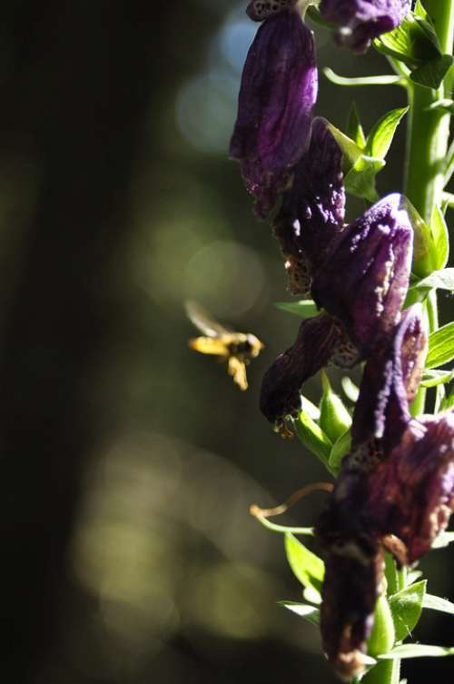 Bee Flowers Forest