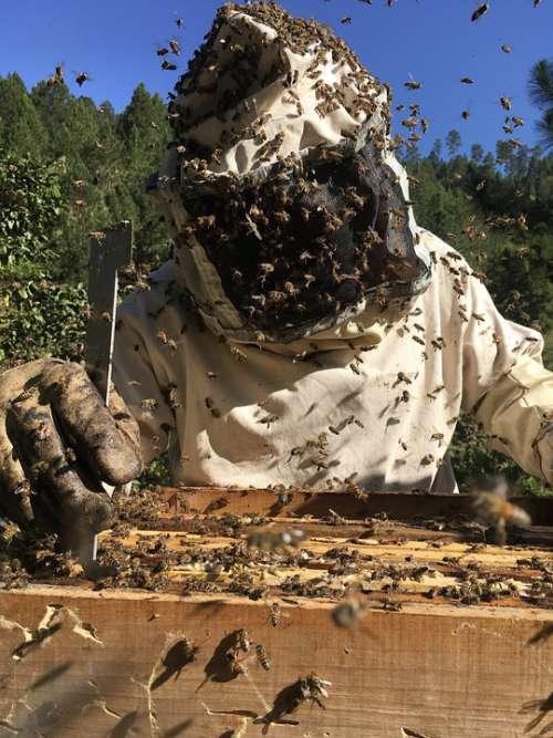 Beekeeping Bees Ara Honey Hive Pollination Diaper