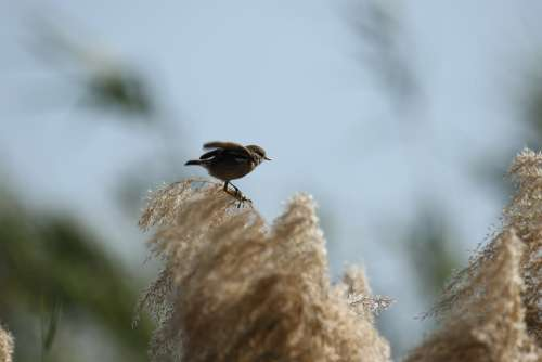 Bird Nature Branch Sky Leaves Winter