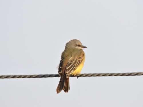 Bird Ave Yellow Nature Animals Pen Feathers