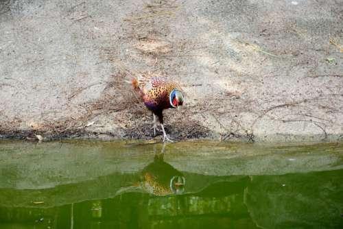 Bird Park Garden Red Brown