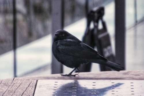 Bird Outside Pigeon Cute