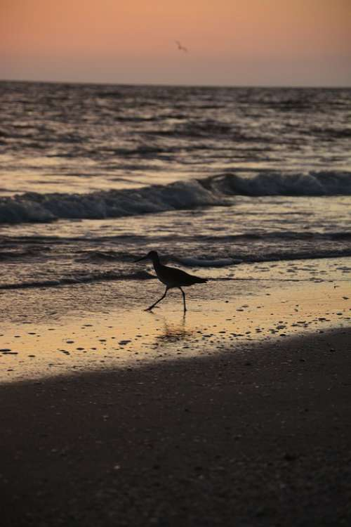 Bird Seagull Beach Sunset
