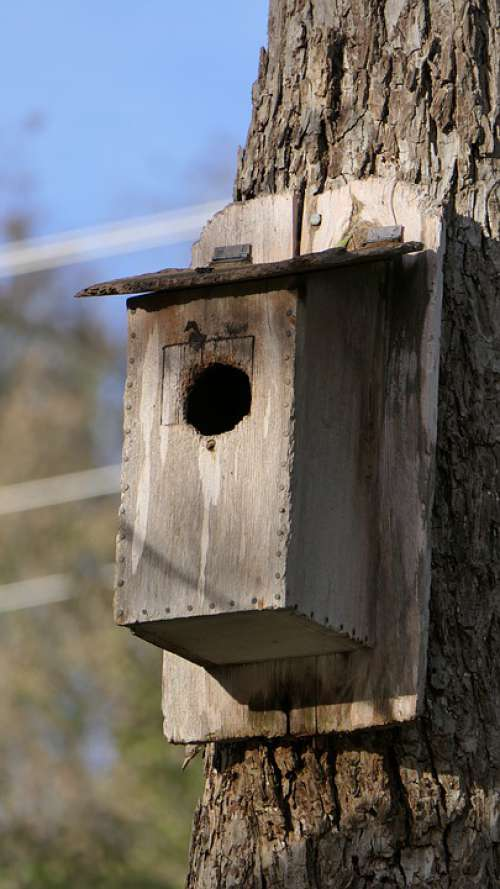 Birdhouse Nature Bird Wooden Outdoor Feeder