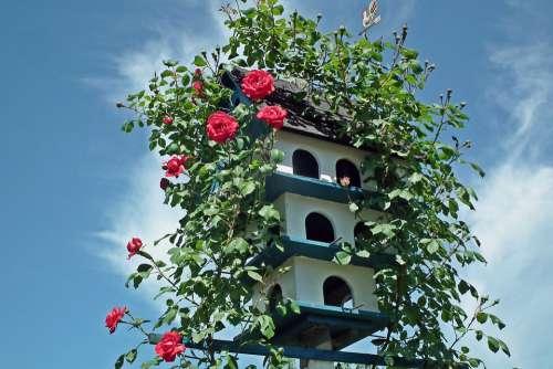 Birdhouse Roses Flowers Creeper Red Garden Summer