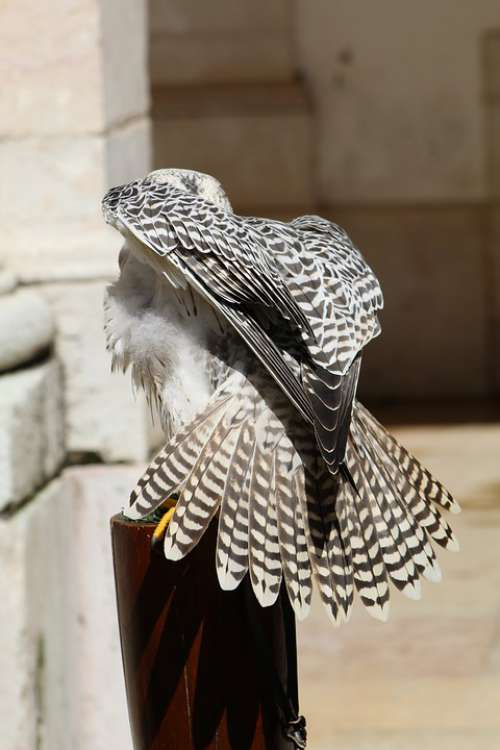 Birds Owls Eagle Owl Bird Nature Predator Pity